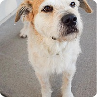 Adopt A Pet :: Spike - DFW, TX