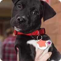 Adopt A Pet :: Luca - Holly Springs, NC