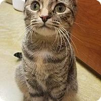 Adopt A Pet :: Brittany - Memphis, TN