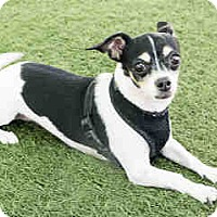 Adopt A Pet :: Pinkie - Agoura, CA