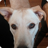 Adopt A Pet :: Afton - Yorktown, VA