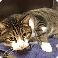 Adopt A Pet :: Willow - Port Clinton, OH