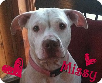 American Pit Bull Terrier Mix Dog for adoption in Georgetown, Kentucky - Missy