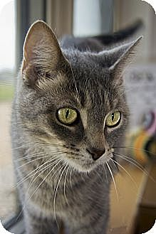 Domestic Shorthair Cat for adoption in Redwood Falls, Minnesota - Miss Kitty