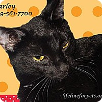Adopt A Pet :: Happy HARLEY - Monrovia, CA