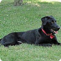 Adopt A Pet :: Anna - Lewisville, IN