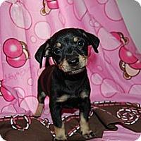 Adopt A Pet :: Peyton - Coral Springs, FL