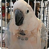 Adopt A Pet :: CC - Punta Gorda, FL
