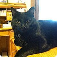 Adopt A Pet :: Blackster - Lenexa, KS