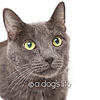 Adopt A Pet :: Charlie - Tempe, AZ
