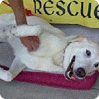 Adopt A Pet :: Oscar URGENT needs foster - Sacramento, CA