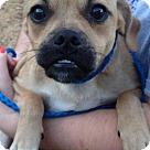 Adopt A Pet :: Bennett