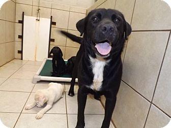 Labrador Retriever Mix Dog for adoption in Thomaston, Georgia - Big Man & Nem