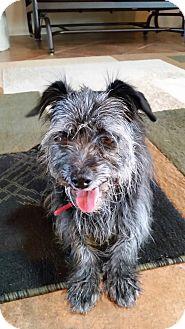 Small Dog Rescue Tucson Az