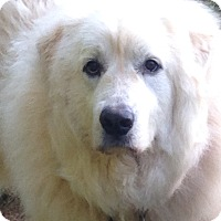Adopt A Pet :: Bella - Hagerstown, MD