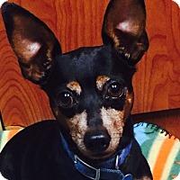 Adopt A Pet :: Brito - Miami, FL