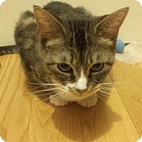 Adopt A Pet :: Ginny - Toronto, ON