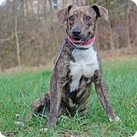 Adopt A Pet :: Piglet - Waldorf, MD