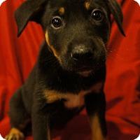 Adopt A Pet :: Reece-Adopted! - Detroit, MI