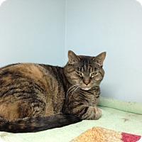 Adopt A Pet :: Nessa - Chicago, IL