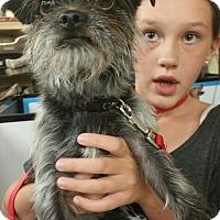 Adopt A Pet :: Rusty - Ogden, UT