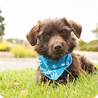 Adopt A Pet :: Tommy - Pacific Grove, CA