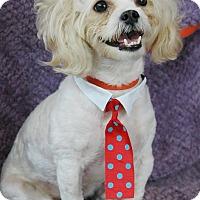 Adopt A Pet :: Felix - Lawrenceville, GA