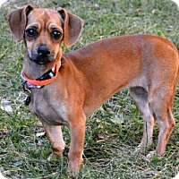 Adopt A Pet :: ENDORA - West Valley, UT