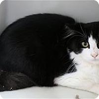 Adopt A Pet :: Tatum - Lincoln, CA