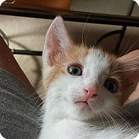 Adopt A Pet :: TAN - Mesa, AZ