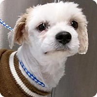Adopt A Pet :: Monkey - Bloomington, IL