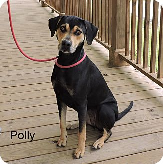 Catahoula Leopard Dog Mix Dog for adoption in Slidell, Louisiana - Baci (Polly)