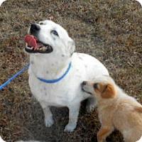 Adopt A Pet :: Phoebe - Allentown, NJ