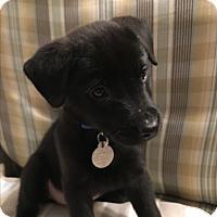 Adopt A Pet :: Jane - Homewood, AL