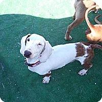 Adopt A Pet :: Barbosa - Atascadero, CA