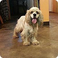 Adopt A Pet :: Freckles - Brattleboro, VT