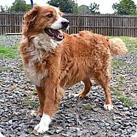 Adopt A Pet :: *Edmund - PENDING - Westport, CT
