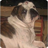 Adopt A Pet :: Velma - San Diego, CA