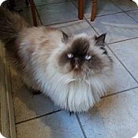 Adopt A Pet :: Gwendolyn - Beverly Hills, CA