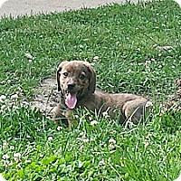 Adopt A Pet :: Kenzie - Homewood, AL