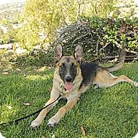 Adopt A Pet :: Tessa - Laguna Niguel, CA