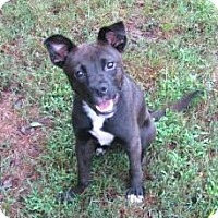 Adopt A Pet :: JASMINE - North Augusta, SC