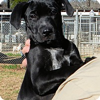 Adopt A Pet :: *Pure Joy - PENDING - Westport, CT
