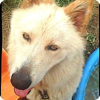Adopt A Pet :: Ghost - Johnson City, TX