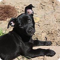 Adopt A Pet :: Bonnie-PENDING - Marion, AR