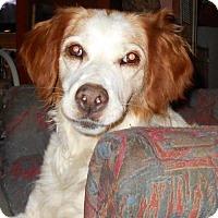 Adopt A Pet :: OH/LuLu - Pittsburgh, PA