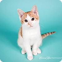 Adopt A Pet :: Miuccia - Sterling Heights, MI