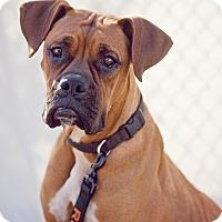 Adopt A Pet :: Mamma Ivy - Las Vegas, NV