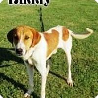 Adopt A Pet :: Buddy - Joliet, IL