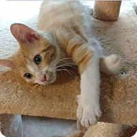 Adopt A Pet :: Mars - Des Moines, IA
